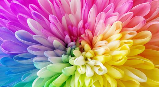 可能性開花ベーシックコース