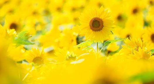 可能性開花アドバンスコース
